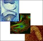Molecular, Cellular, and Tissue Biomechanics