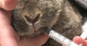 Pet Care: Rabbits