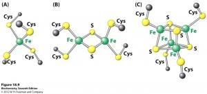 General Biochemistry II with Kevin Ahern