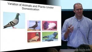 Principles of Mendelian and Molecular genetics