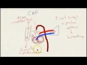 Quick STEP 1 Prep: Cardiovascular Medicine