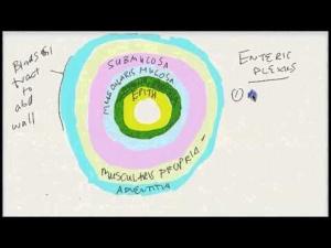 Quick STEP 1 Prep: GI Medicine