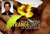 Strange Days on Planet Earth (2005)