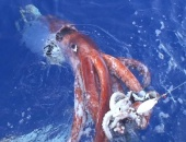 Kraken Project: In Search of the Giant Squid (2003)