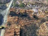 Tasmania Chainsaw Massacre (2009)
