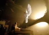 Angels (2006)