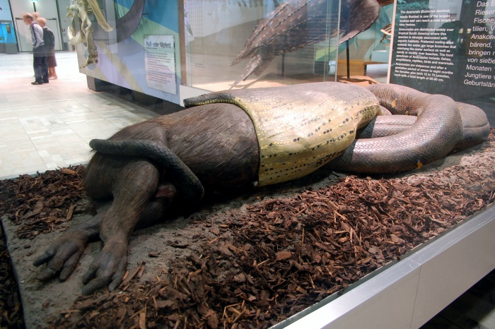 Senckenberg Museum exhibit of a capybara being swallowed 