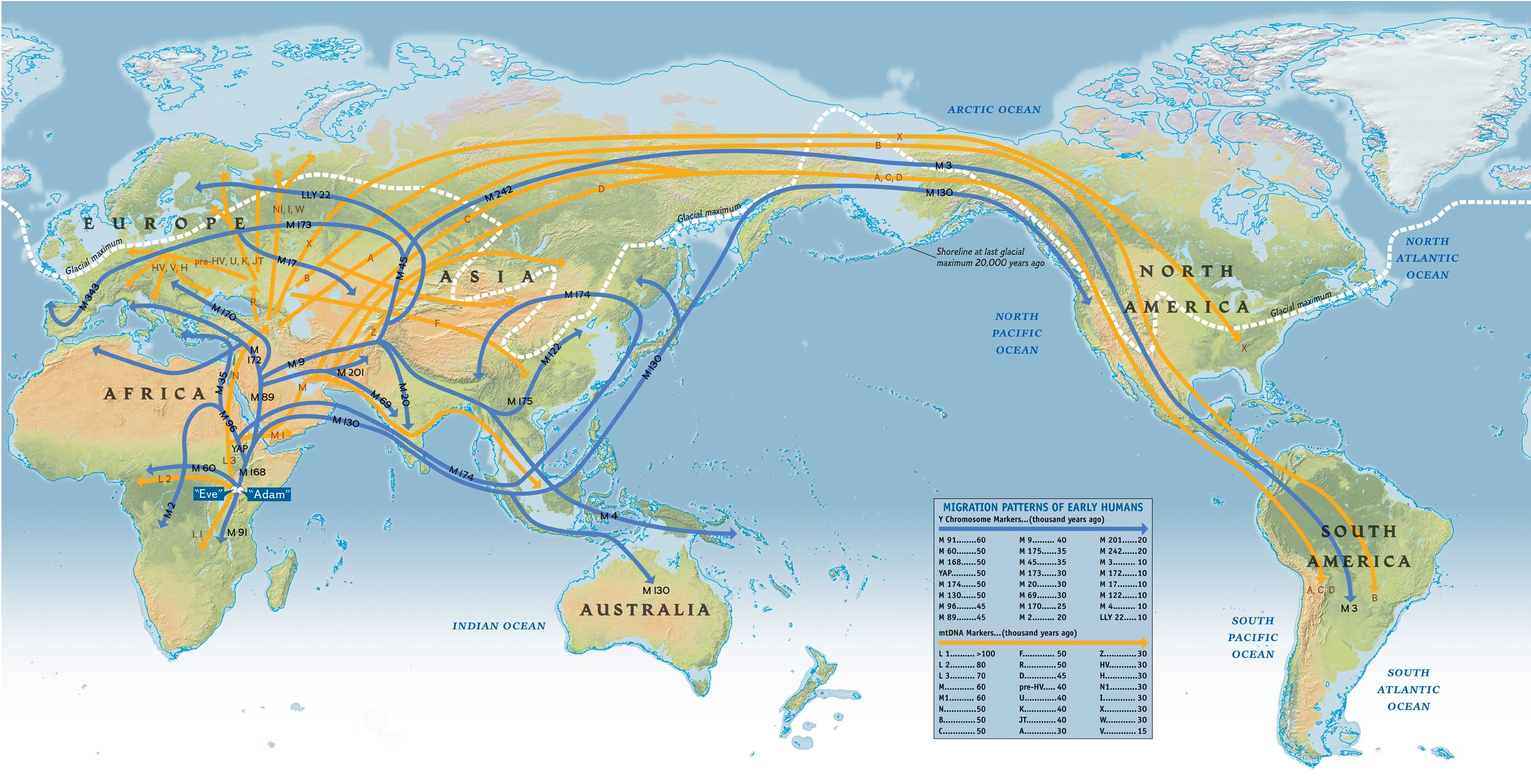 migration patterns of early humans cosmolearning anthropology