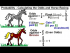 Calculating the Odds and Horse Racing