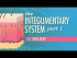 The Integumentary System, Part 1: Skin Deep