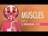 Muscles, Part 2 - Organismal Level