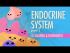 Endocrine System, Part 1 - Glands & Hormones