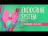 Endocrine System, Part 2 - Hormone Cascades