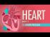 The Heart, Part 1 - Under Pressure