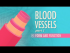 Blood Vessels, Part 1 - Form and Function
