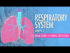 Respiratory System, Part 1