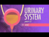 Urinary System, Part 2