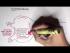 Nephrology - Glomerular Filtration