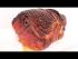 Honey Glazed Ham Recipe (Episode 556)
