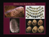 CARTA: Art in Neanderthal and Paleolithic Cultures