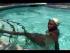 Ballet Leg for Synchronized Swimming Figures