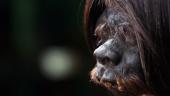 Amazon Headshrinking Process (National Geographic)