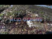 Acid Oceans - American Museum of Natural History