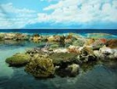 Underwater Reef (National Geographic)