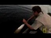 Monster Fish of the Amazon (2008)