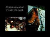 Science Matters: Symbolic Communication in stingless bees - Exploring the 3rd dimension