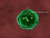 Allergy 3D Medical Animation