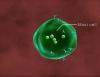 Allergy 3D Medical Animation