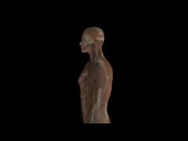 3D View of Human Male Anatomy