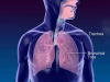 Respiration 3D Medical Animation
