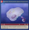 Cytotoxic T-Cell Activity Against Target Cells